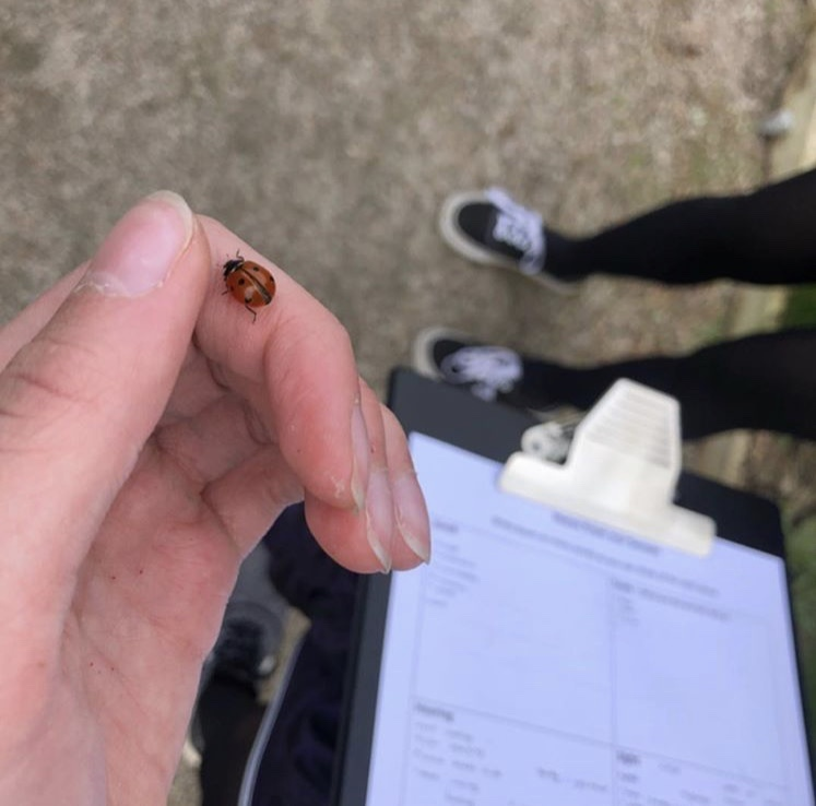 Ladybird on girls hand as she writes